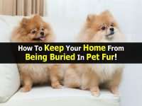 How To Keep Your Home From Being Buried In Pet Fur!