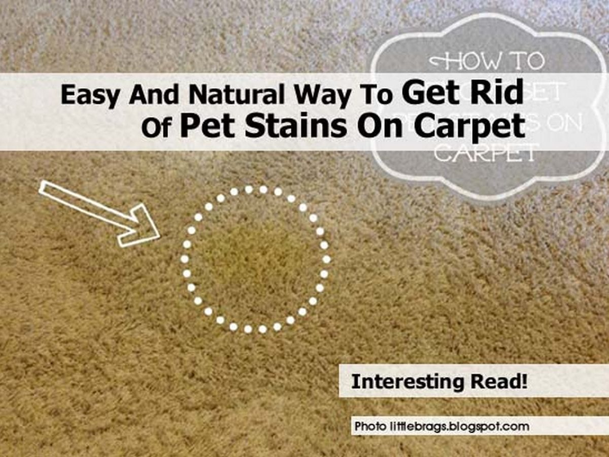 easy and natural way to get rid of pet stains on carpet. Black Bedroom Furniture Sets. Home Design Ideas