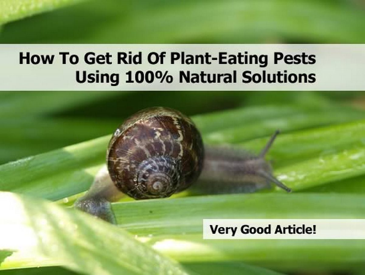 How to get rid of plant eating pests using 100 natural - How to get rid of bugs in garden ...