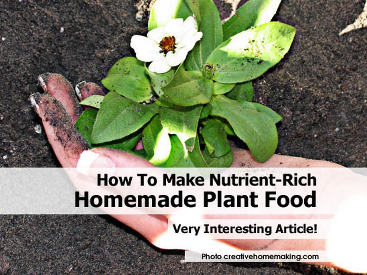 how to make nutrient rich homemade plant food
