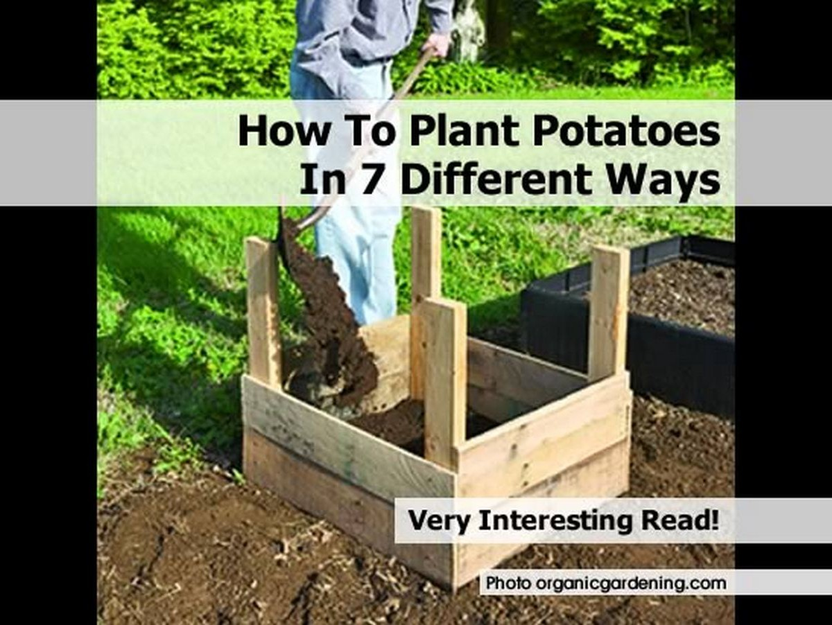 How to plant potatoes in 7 different ways for Different ways to prepare potatoes