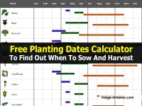 Free Planting Dates Calculator To Find Out When To Sow And Harvest