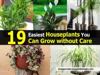 19 Easiest Houseplants You Can Grow without Care
