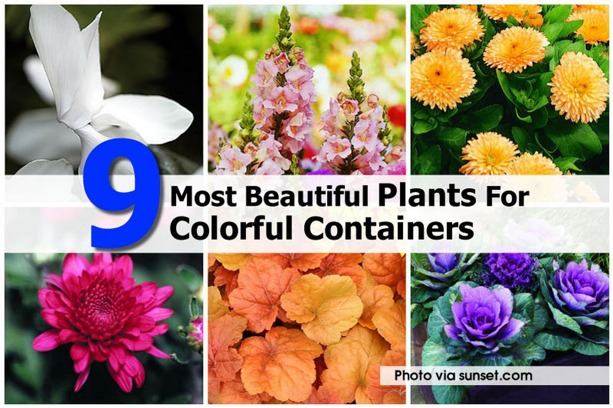 plants-for-colorful-container-sunset-com
