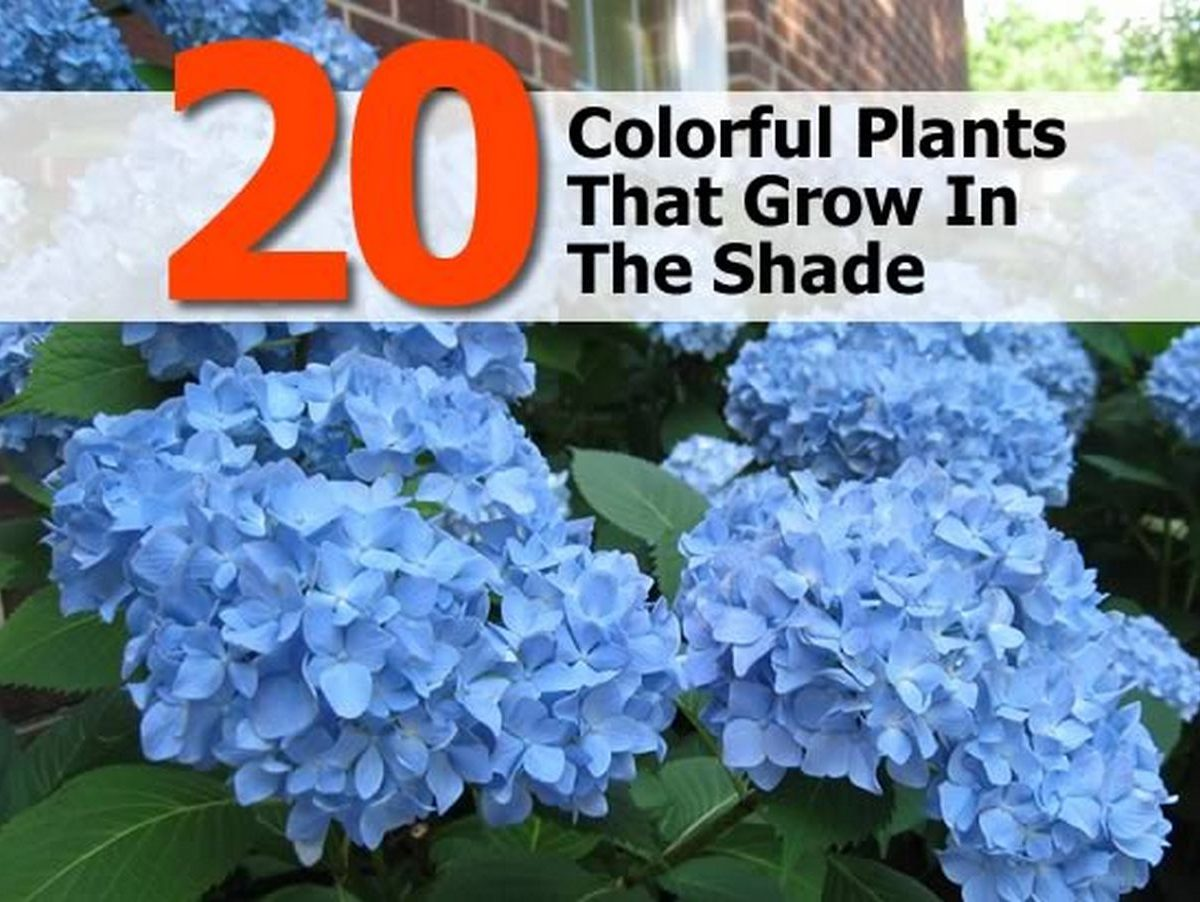 20 colorful plants that grow in the shade - Plants that dont need soil natures wonders ...