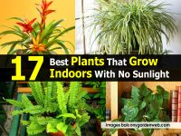 17 Best Plants That Grow Indoors With No Sunlight