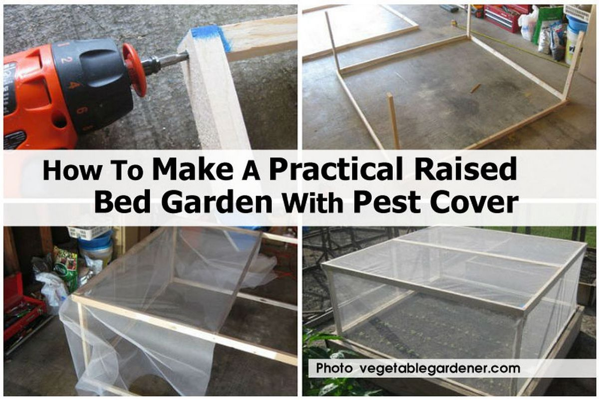 How To Make A Practical Raised Bed Garden With Pest Cover
