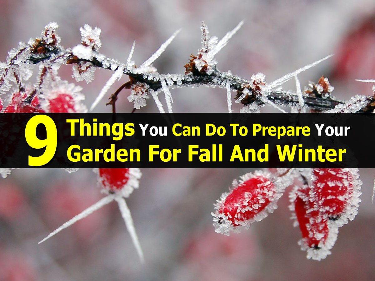 9 Things You Can Do To Prepare Your Garden For Fall And Winter
