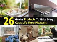 26 Genius Products To Make Every Cat's Life More Pleasant