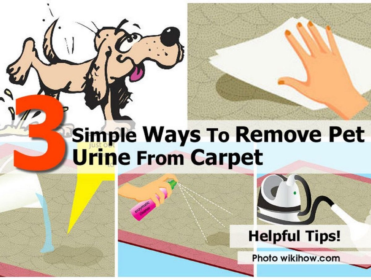 3 simple ways to remove pet urine from carpet. Black Bedroom Furniture Sets. Home Design Ideas