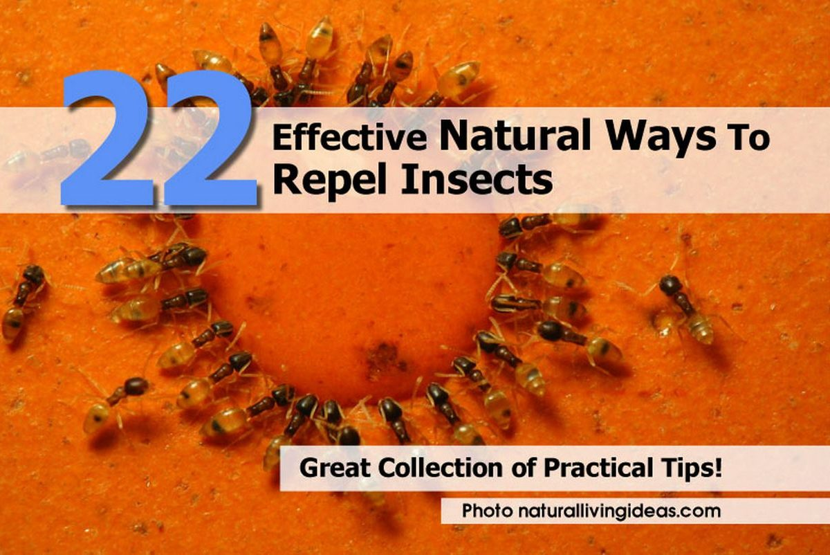 22 Effective Natural Ways To Repel Insects