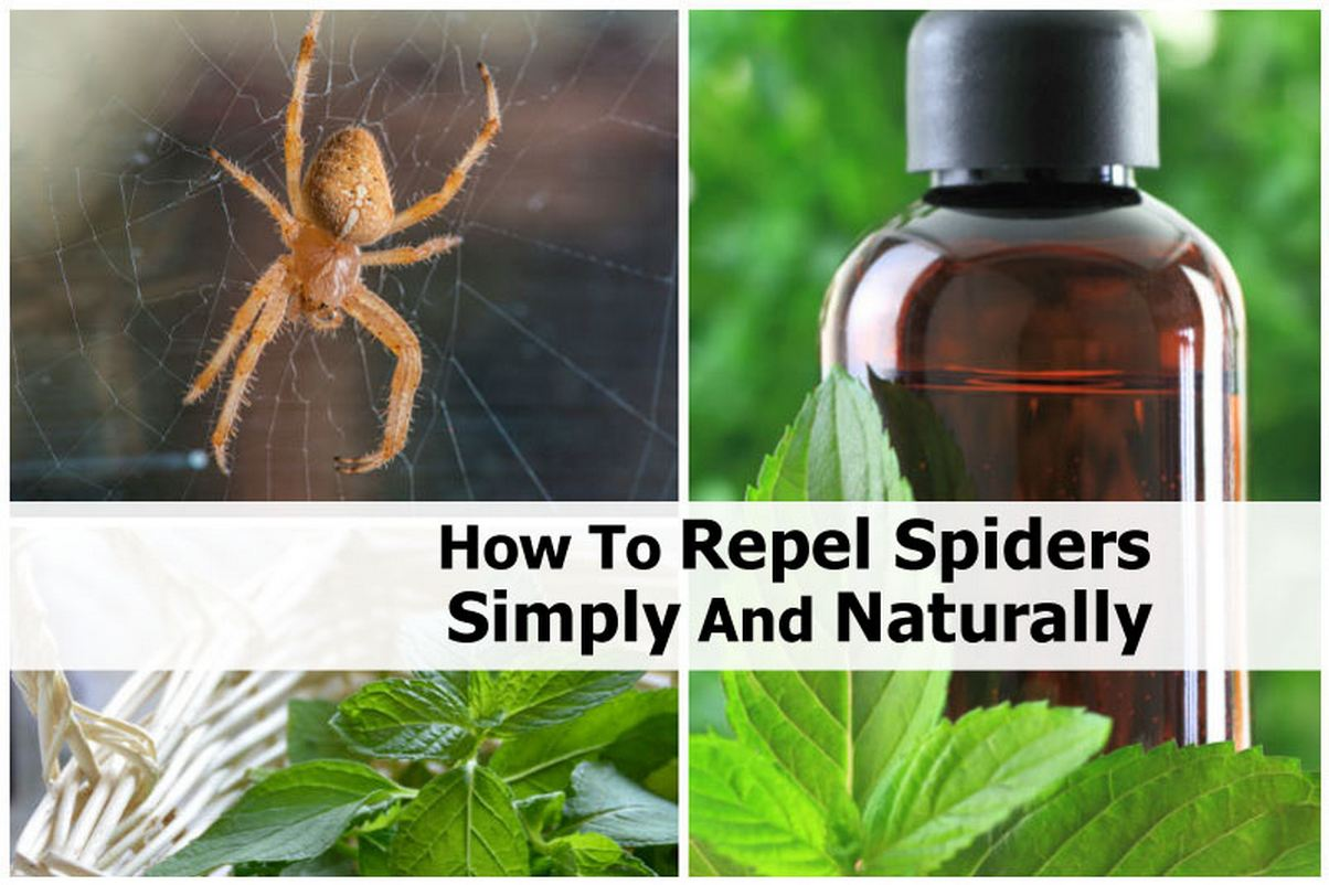 How to repel spiders simply and naturally Natural spider repellent