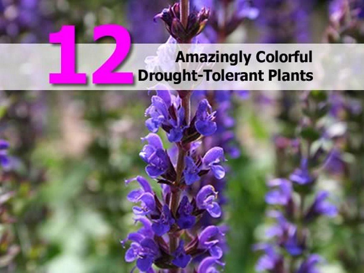 12 Amazingly Colorful Drought Tolerant Plants