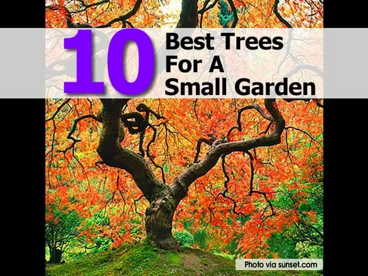 10 best trees for a small garden for Ideal trees for small gardens