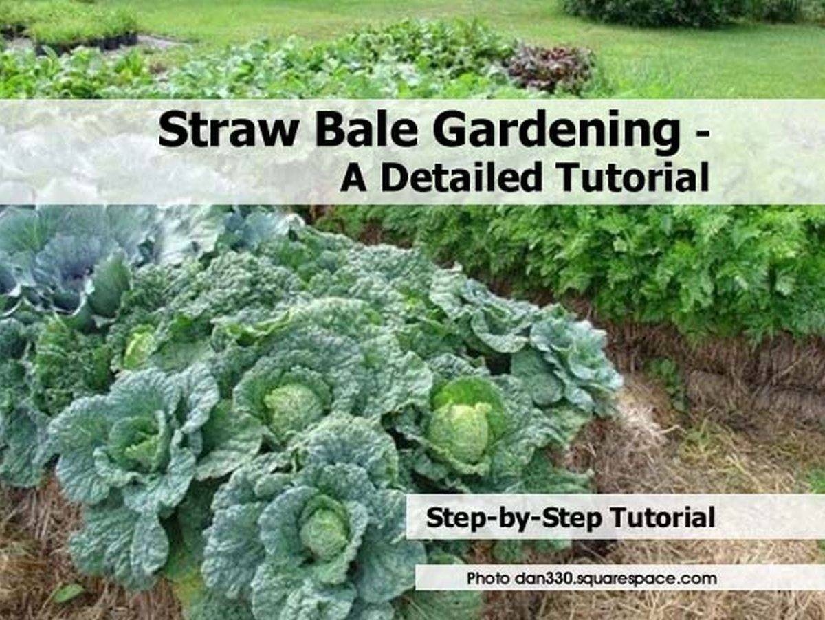 Straw bale gardening a detailed tutorial for Straw bale gardening techniques