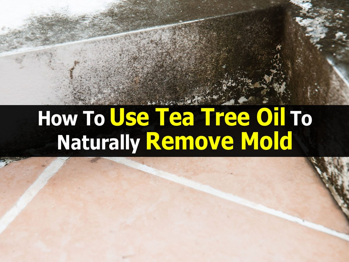 How to use tea tree oil to naturally remove mold - Natural ways remove mold ...