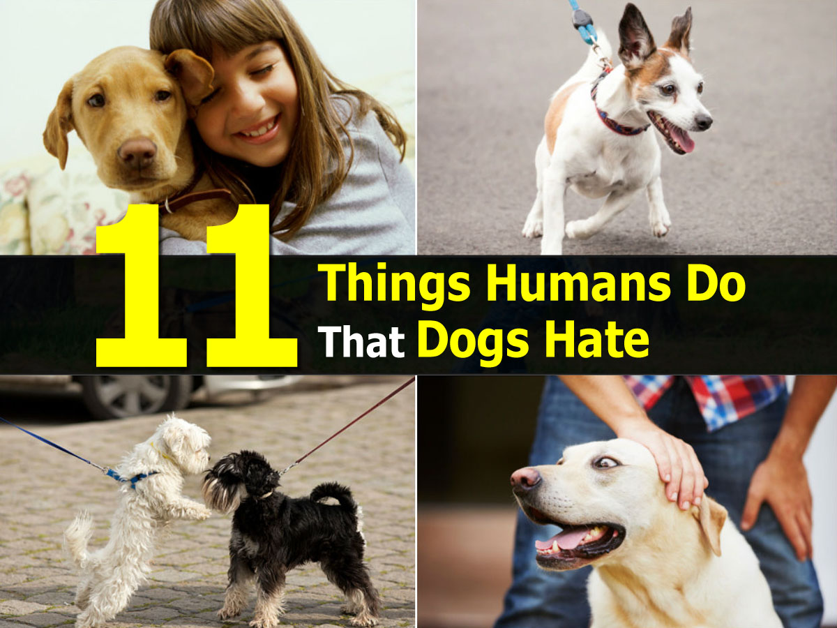 things-humans-do-that-dogs-hate