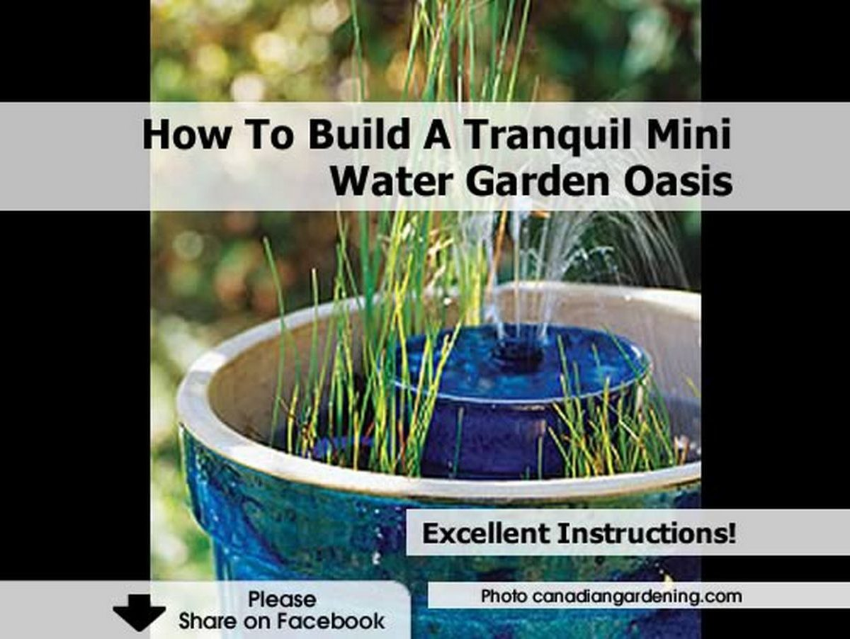 How to build a tranquil mini water garden oasis for How to water a garden