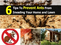 tips-to-prevent-ants