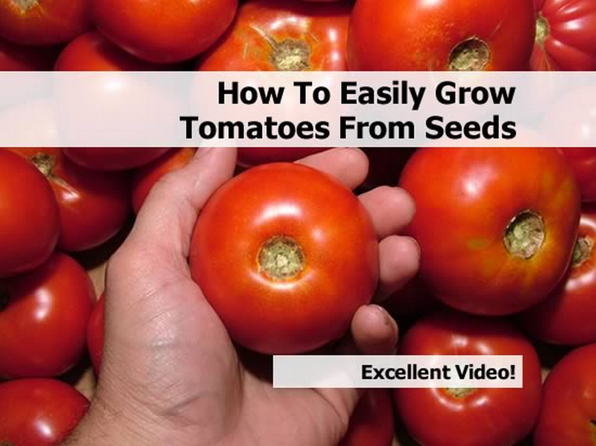 how to easily grow tomatoes from seeds