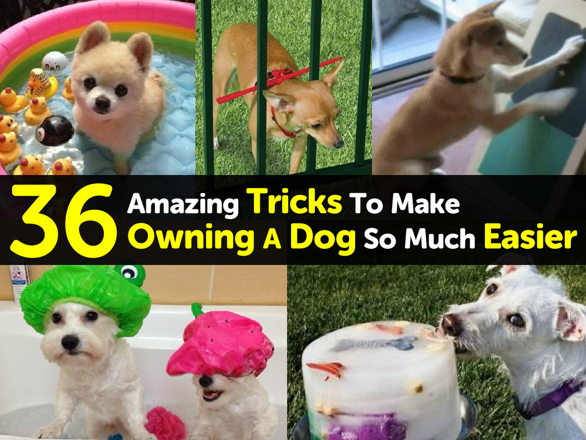 tricks-to-make-owning-a-dog-easier1
