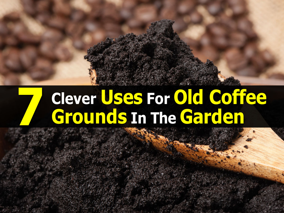 use for used coffee grounds