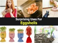 uses-for-eggshells