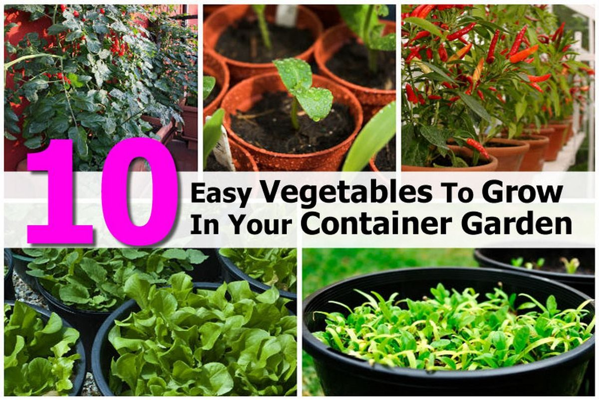 10 easy vegetables to grow in your container garden for Indoor gardening made easy