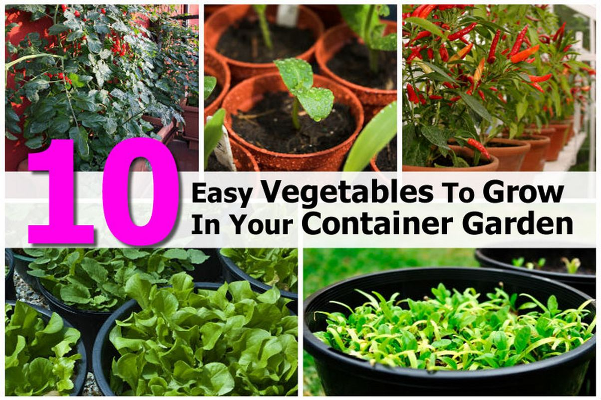 Container Vegetable Vertical Garden 2017 2018 Best