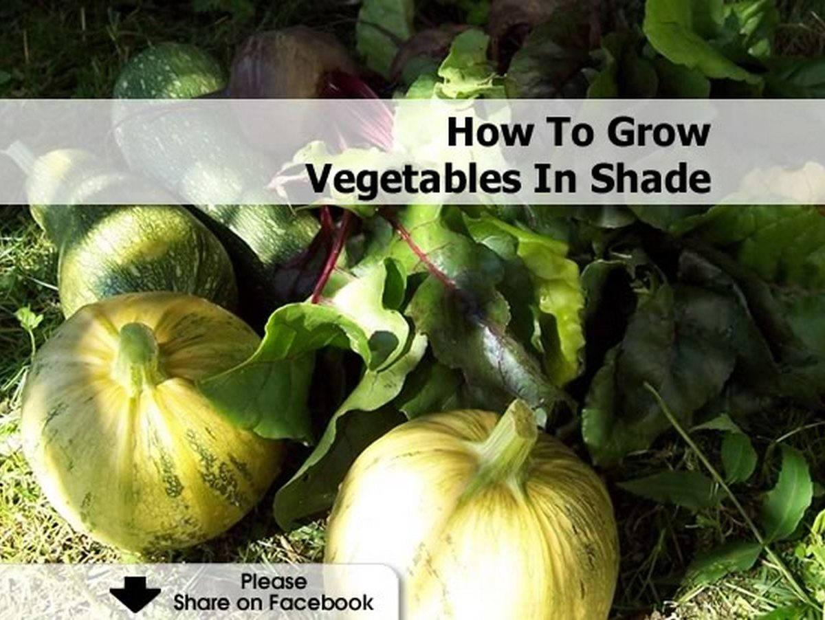 How to grow vegetables in shade for What vegetables to grow