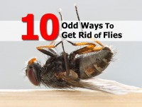 ways-to-get-rid-of-flies
