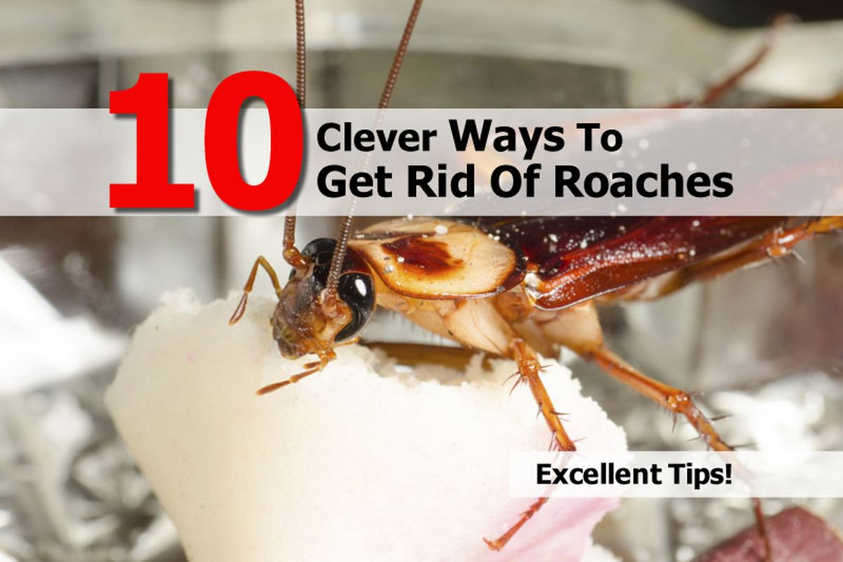 Best Natural Way To Get Rid Of German Cockroaches