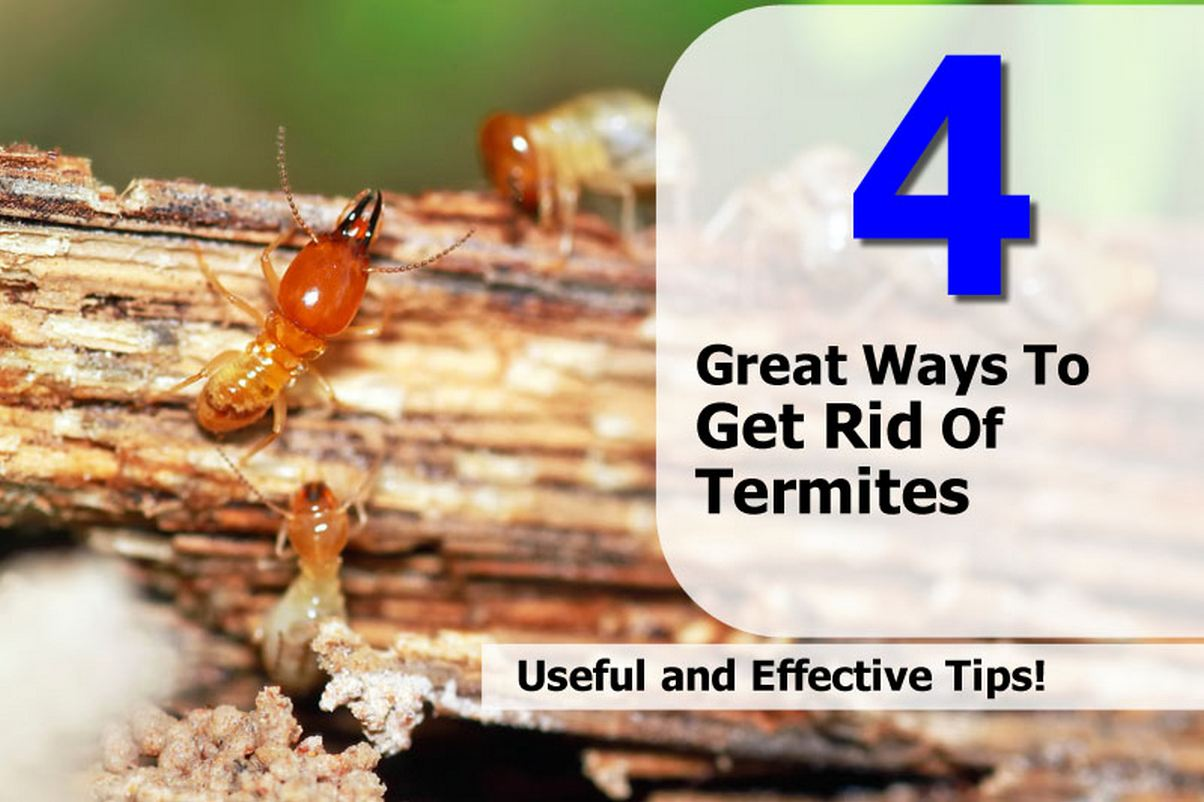 Termite Mound Get Rid Of Termites In House
