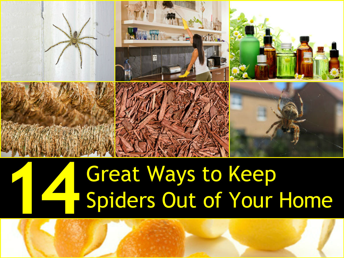 14 great ways to keep spiders out of your home naturally for How to keep spiders out of your bedroom