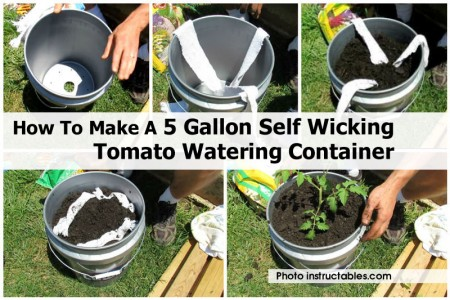 wicking-tomato-watering-instructables-com