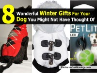 winter-gifts-for-dog-3milliondogs-com